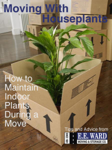 E.E. Ward Blog Houseplants